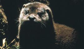 L'Oasi della lontra